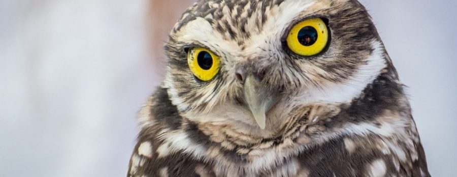 SEO - Owl - WHO WHO are you trying to reach with SEO?